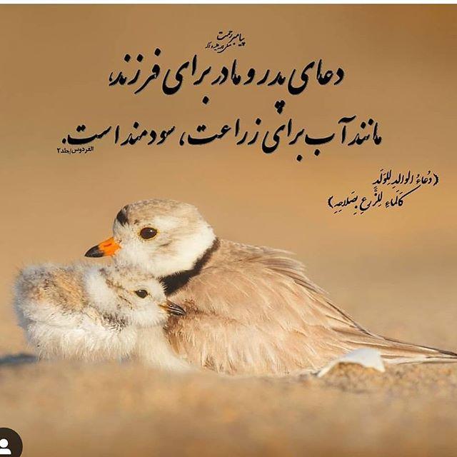 دعای پدر و مادر برا فرزند مانند آب برای زراعت سودمند است