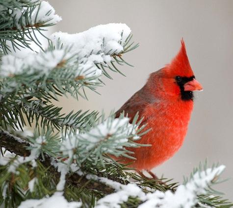 عکس های پرنده روی برف