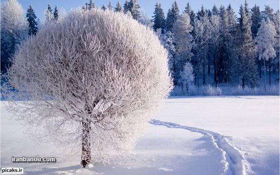 عکس پروفایل زمستان+عکس نوشته زمستان