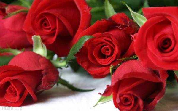 عکس پروفایل گل های زیبا + متن های خاص عاشقانه